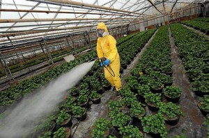 Le danger des pesticides | Le Blog de Camille