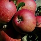 Les fruits et légumes d'hiver, Manger de saison, épisode #2
