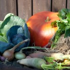 Fruits et légumes de saison: qu'est ce qu'on mange en Février?